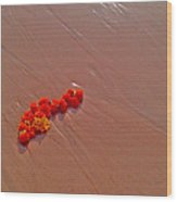Marigolds On Beach Wood Print