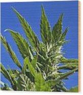 Marijuana Wood Print