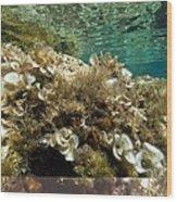 Marine Algae Wood Print