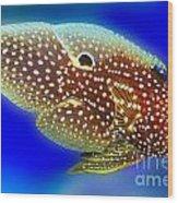 Marine Betta Fish Wood Print