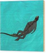 Marine Iguana (amblyrhynchus Cristatus) Swimming Wood Print
