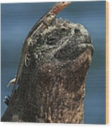 Marine Iguana And Lava Lizard Wood Print