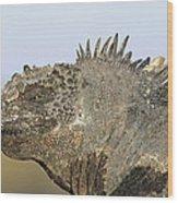 Marine Iguana Male Santa Cruz Island Wood Print