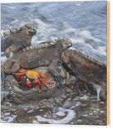 Marine Iguana Trio And Sally Lightfoot Wood Print