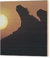 Marine Iguanas Silhouetted Galapagos Wood Print