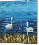 Marion Lake Swans Wood Print