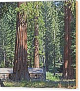 Giant Sequoias Mariposa Grove Wood Print