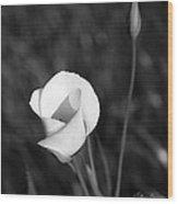 Mariposa Lily 2 Wood Print