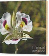 Mariposa Lily Wood Print