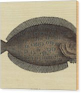 Mark Catesby English, 1679 - 1749, The Sole Pleuronectes Wood Print