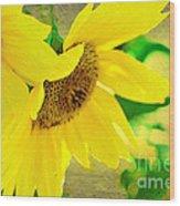 Mark Twain's Sunflowers Wood Print