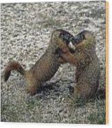 4m09150-02-marmot Fight Wood Print