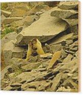 Marmots Playing Wood Print