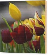 Maroon And Gold Tulips Wood Print