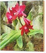 Maroon Cattleya Orchids Wood Print