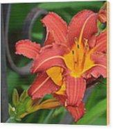 Maroon Day Lilies Wood Print