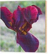 Maroon Iris Wood Print
