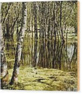 Marsh At Cheadle Lake Wood Print