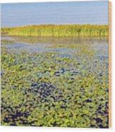 Marsh At Edge Of Lake Okeechobee Wood Print