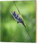 Marsh Flower Wood Print