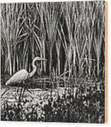 Marsh Hunter Wood Print