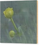 Marsh Marigold Bud Wood Print
