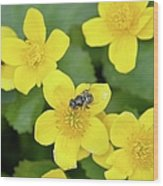 Marsh Marigold Wood Print