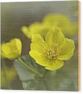 Marsh Marigolds Wood Print