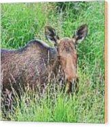 Marsh Moose Wood Print