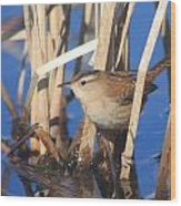 Marsh Wren Wood Print by John Burk