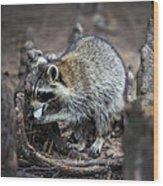 Marshmallow Muncher Wood Print