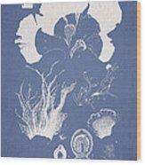 Martensia Elegans Hering Wood Print by Aged Pixel
