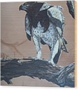 Martial Eagle Wood Print