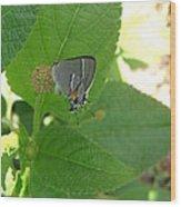 Martial Scrub Hairstreak Butterfly Wood Print