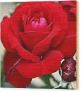Marvelous Red Rose Wood Print