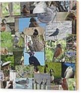 Maryland Birds Wood Print by Tom Ernst