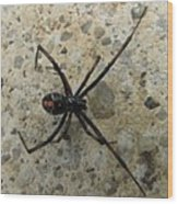 Maryland Black Widow Wood Print