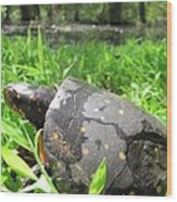 Maryland Spotted Turtle Wood Print