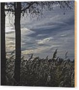 Maryland Wetland 2 Wood Print
