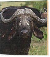 Masai Mara Buffalo Wood Print