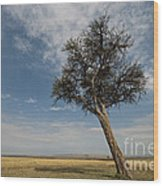 Masai Mara National Reserve Wood Print