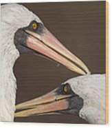 Masked Booby Couple Allopreening Wood Print