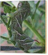 'mater Bug Wood Print