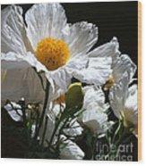 Matilija Poppies Wood Print
