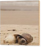 Mating Hookers Sealions Taking A Nap On Beach Wood Print