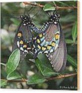 Mating Swallowtails Wood Print