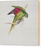 Matons Parakeet Wood Print by Edward Lear