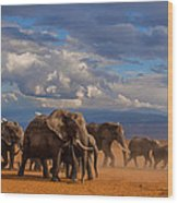 Matriarch On Amboseli Wood Print