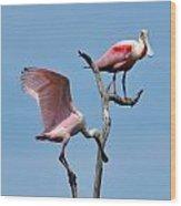 Mature And Immature Roseate Spoonbills On Limb Wood Print