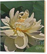 Mature Lotus Flower And Cute Hovering Honeybee Wood Print